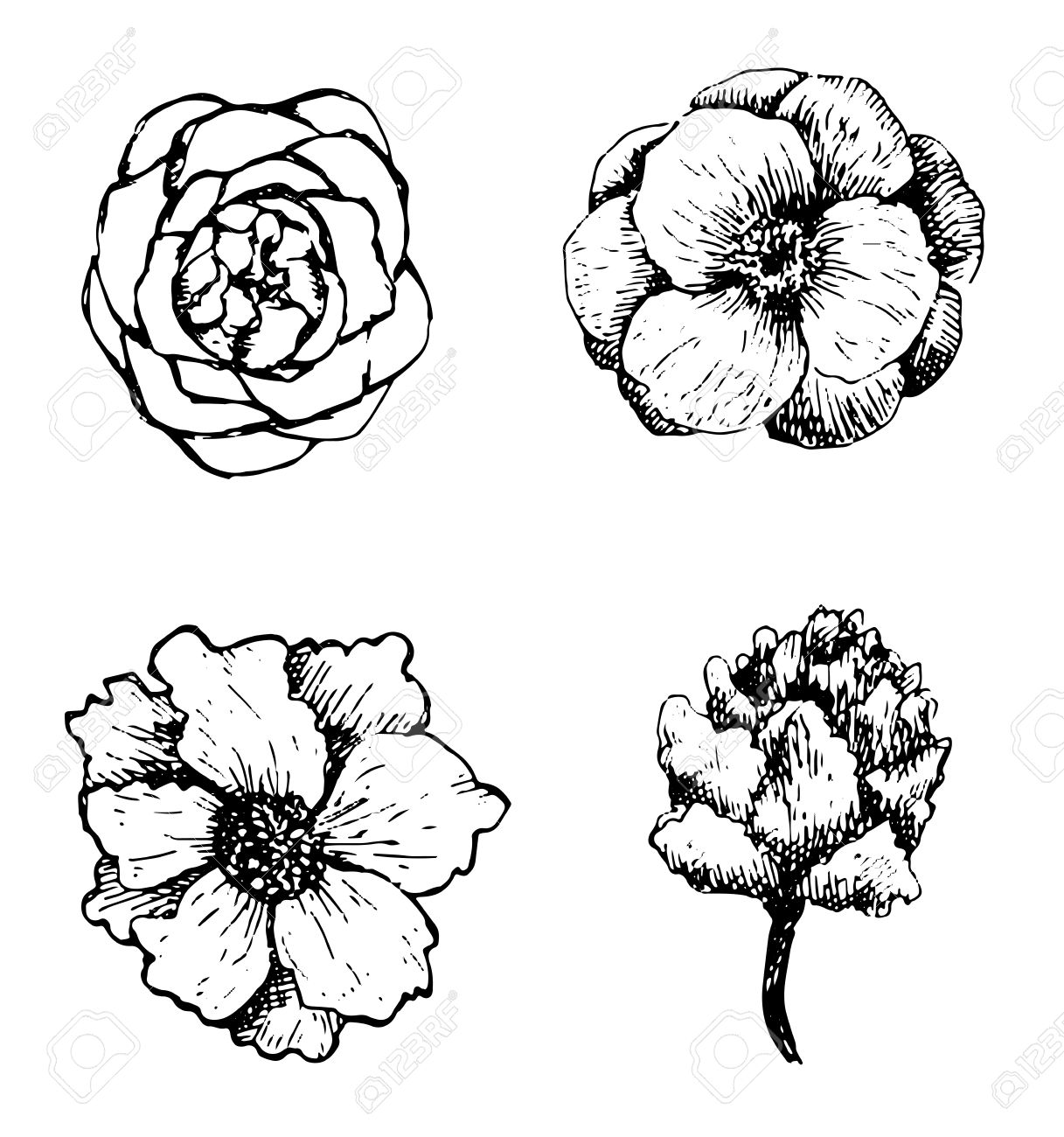 Set of hand drawn flowers. Stock Vector - 18640570