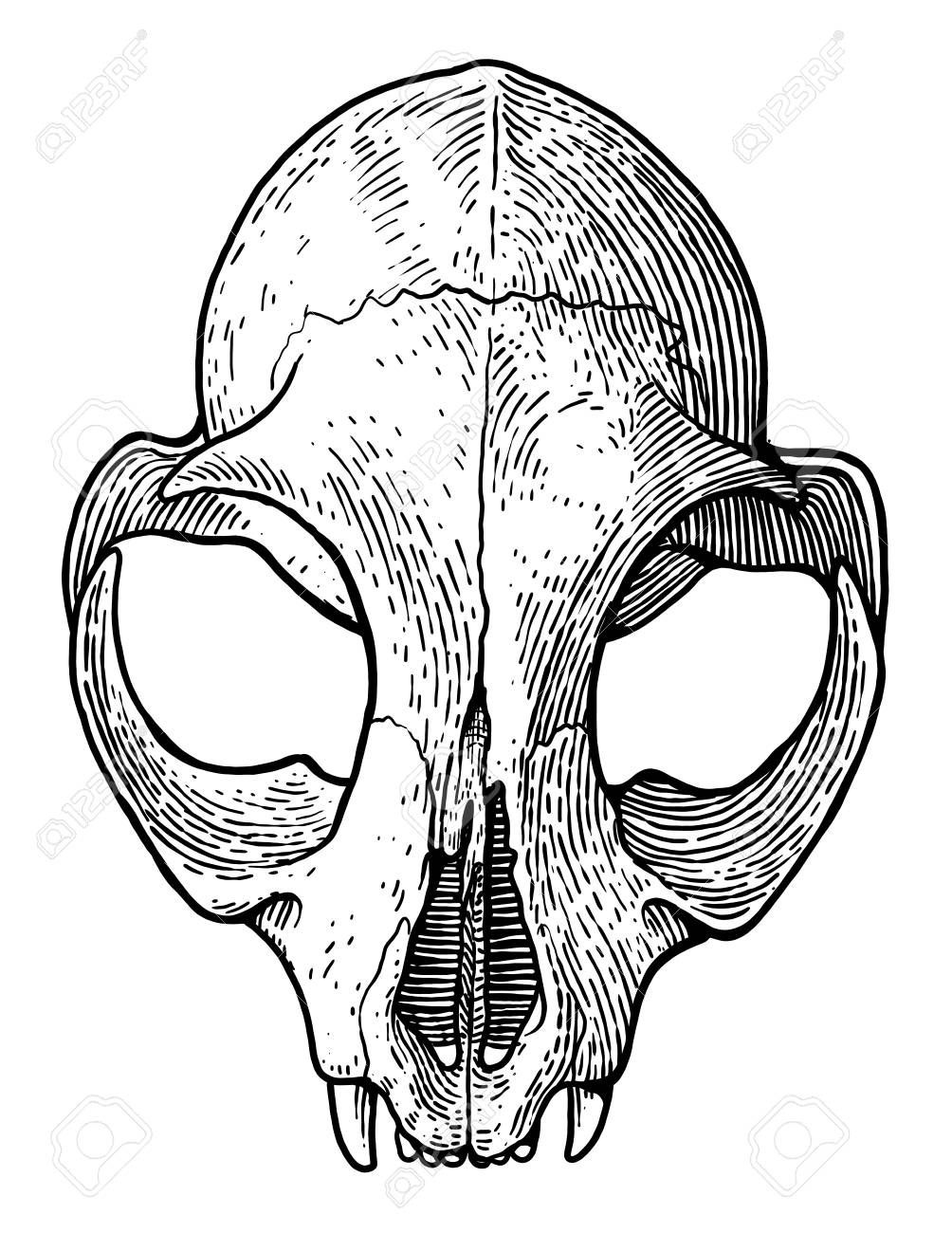 Skull Line Drawing Art