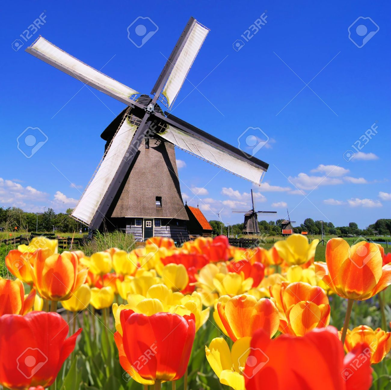 Traditional Dutch windmills with vibrant tulips in the foreground, The Netherlands Stock Photo - 14615182