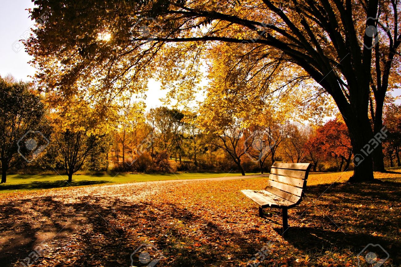 Bench In A Park In Late Day Autumn Light Stock Photo Picture And