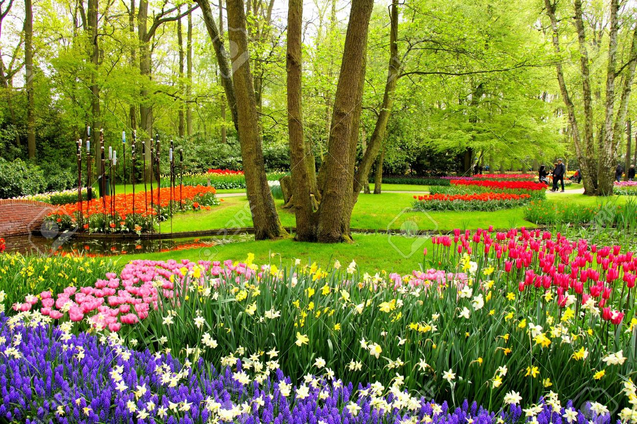 Magie du Printemps !! - Page 2 37469710-Tulipes-et-de-fleurs-printani-res-color-es-Jardins-de-Keukenhof-Pays-Bas-Banque-d'images