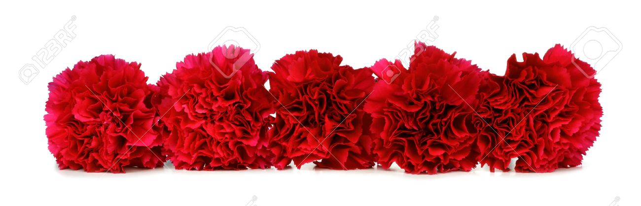 Border Arrangement Of Red Carnation Flowers Over A White Background
