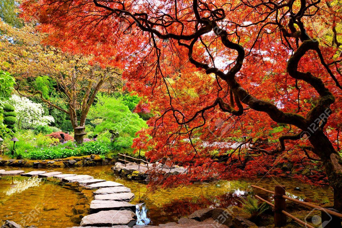 Pond with overhanging red japanese maples during springtime pond with overhanging red japanese maples during springtime butchart gardens victoria bc thecheapjerseys Choice Image