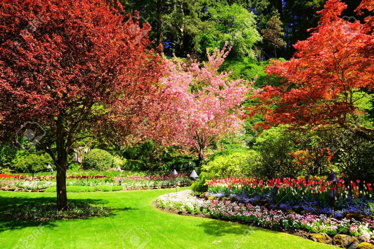 Red And Pink Spring Trees And Colorful Tulip Flowers In A Garden