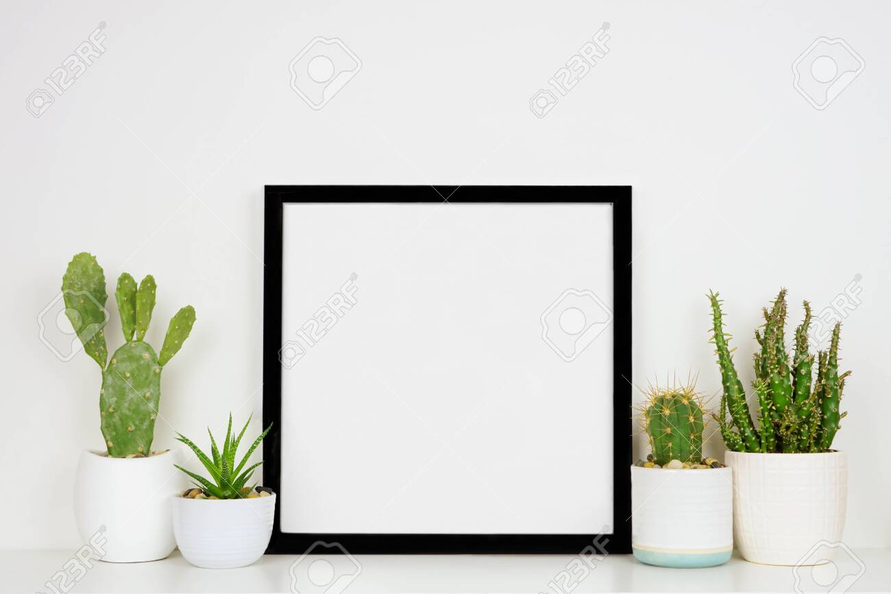 Mock up black square frame with potted cacti and succulent plants on a shelf against a white wall - 145633692