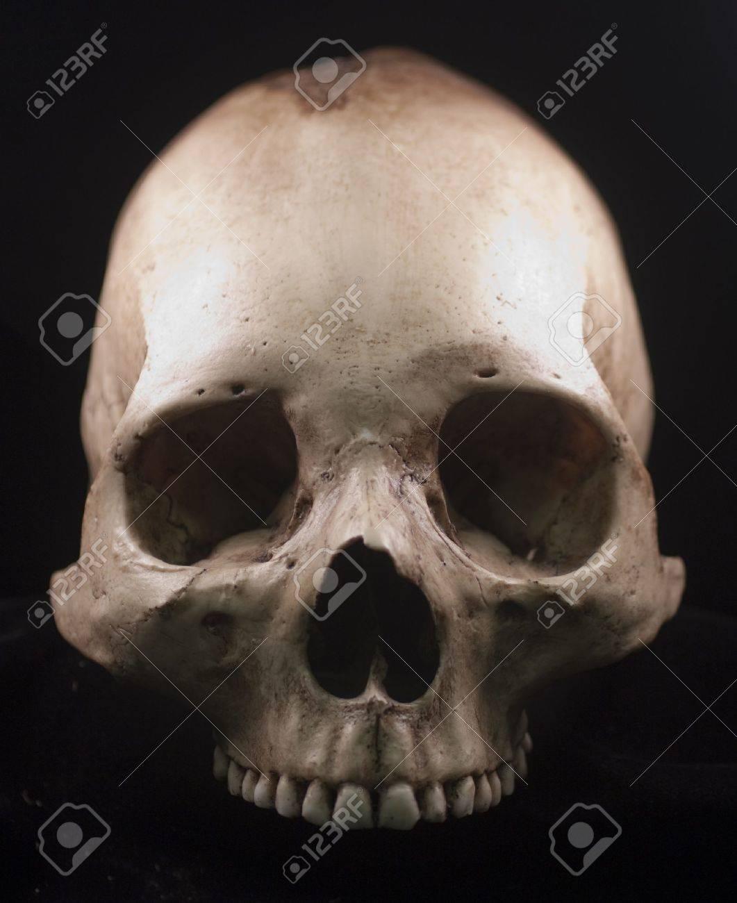 Human skull - bone head dead teeth spooky scary pirate isolated evil Stock Photo - 9895705