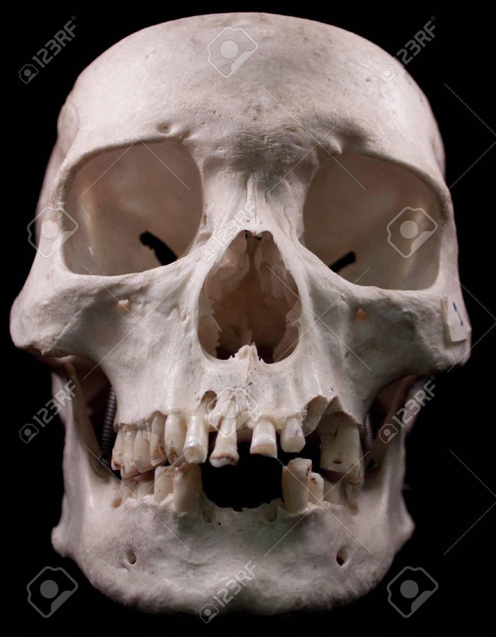 Human skull - bone head dead teeth spooky scary pirate isolated evil Stock Photo - 9895227
