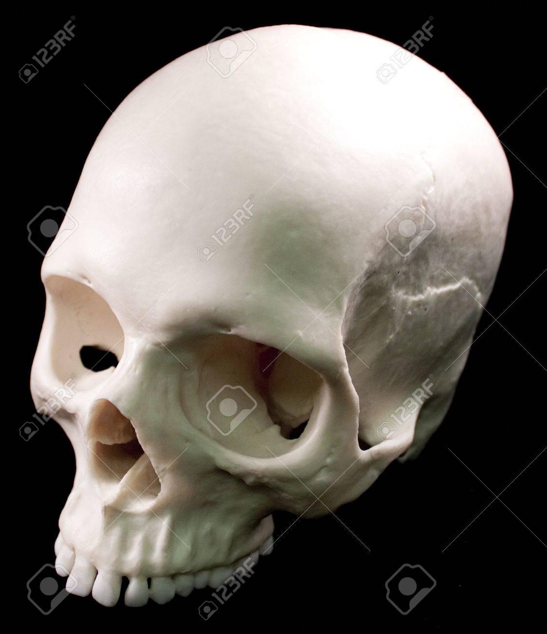 Human Skull Bone Head Dead Teeth Spooky Scary Pirate Isolated