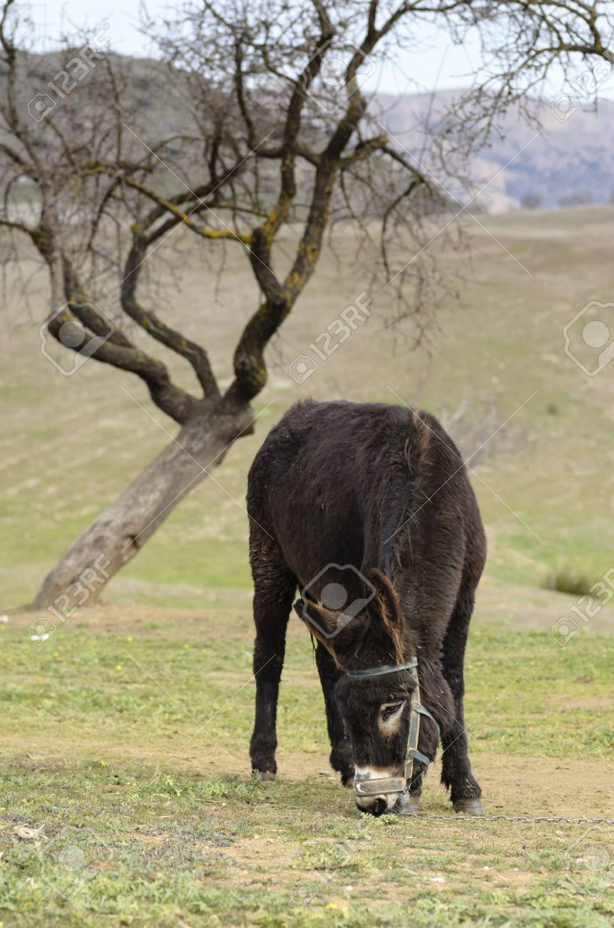 Landscape with a donkey Stock Photo - 16989338