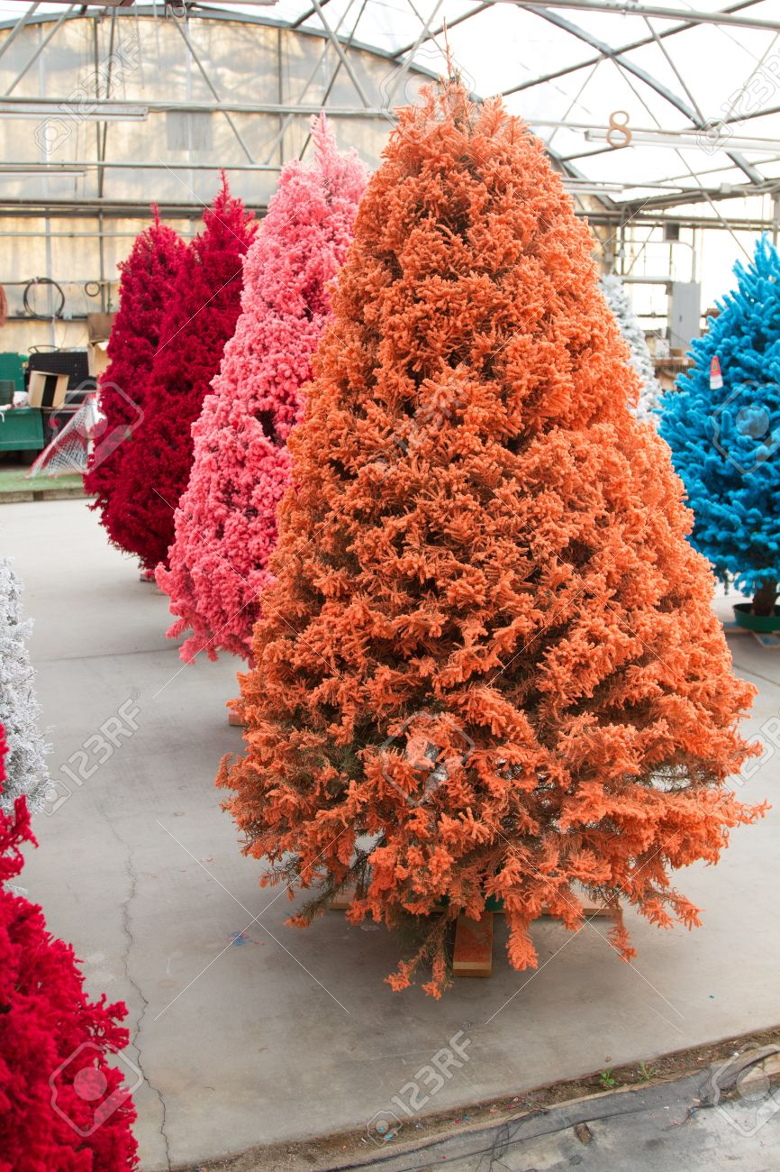 Shot Of Colored Christmas Trees Flocked In Different Colors Stock