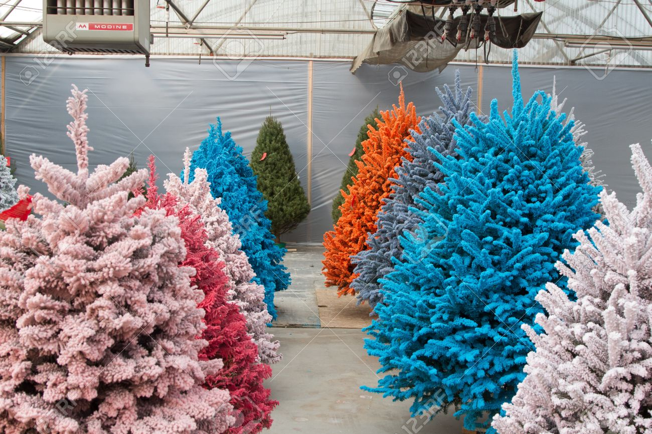 shot of colored christmas trees flocked in different colors stock photo - Flocked Real Christmas Tree