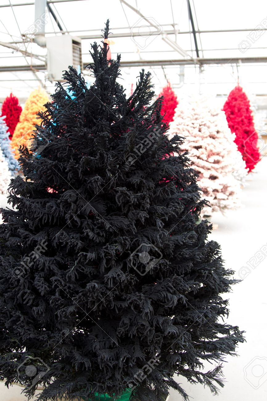 Black Flocked Christmas Tree Stock Photo, Picture And Royalty Free ...