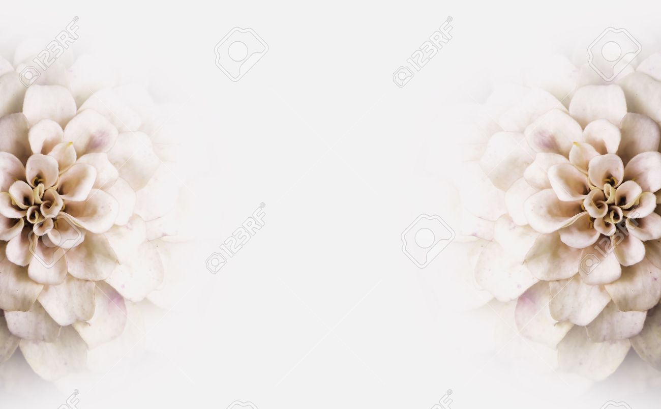 Background Of White Flowers Copy Space Stock Photo Picture And