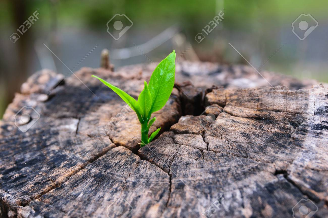 a strong seedling growing in the center trunk tree as a concept of support building a future. - 30278361
