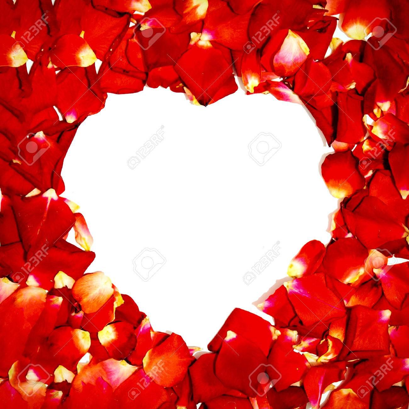 Contexte De La Belle Rose Rouge Petales Coeur D Amour Banque D