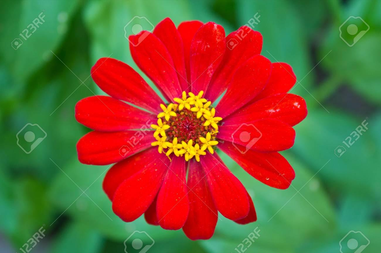 Il Est Facile De Faire Pousser Des Fleurs Qui Fleurissent Tout Au