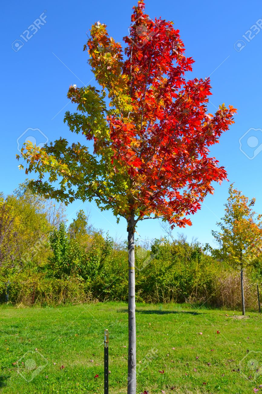 Colorful Leaves On The Trees During The Fall Season Stock Photo ...