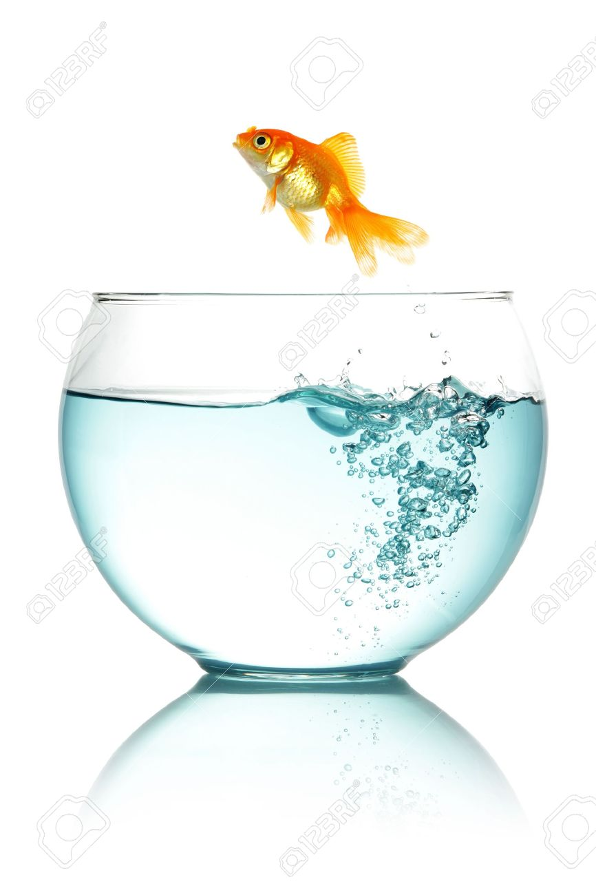 Goldfish jumping out of fishbowl isolated on white Stock Photo - 12002317