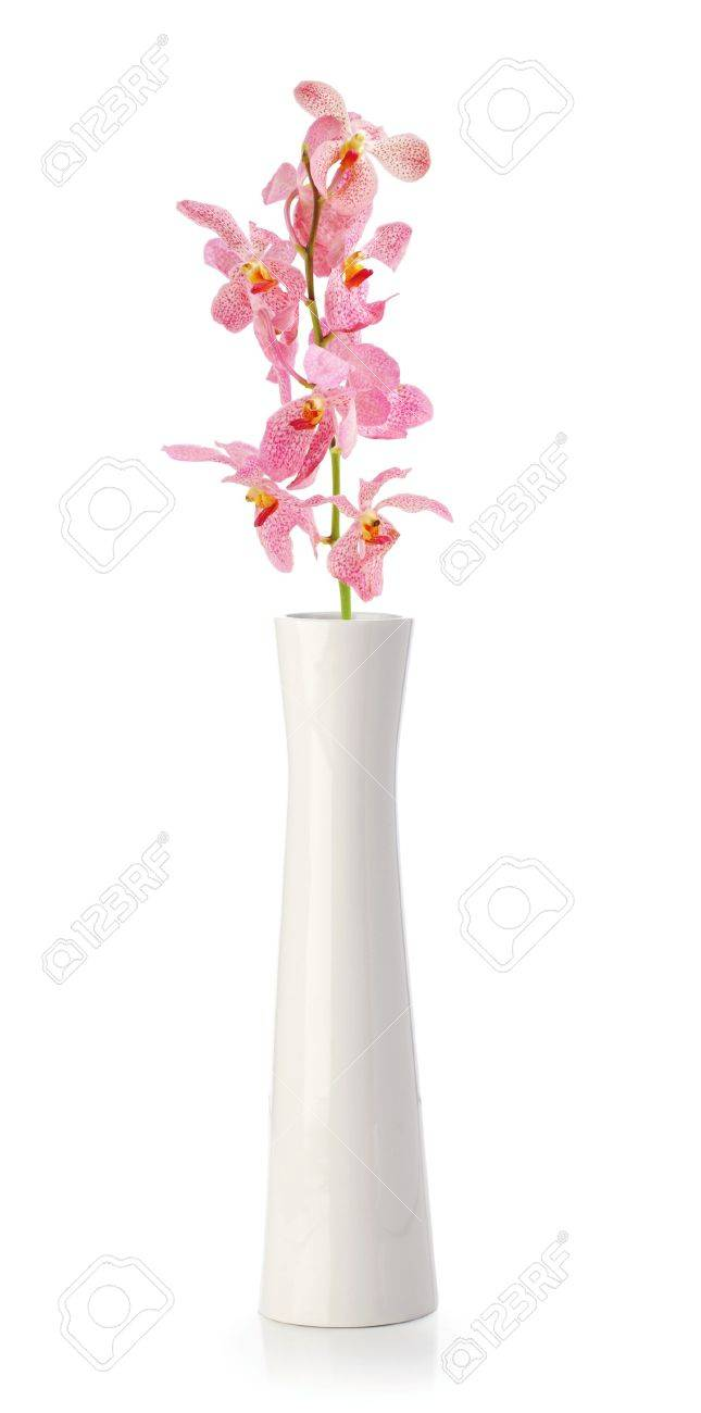 Pink Orchid flower in white vase isolated on white - 13507936
