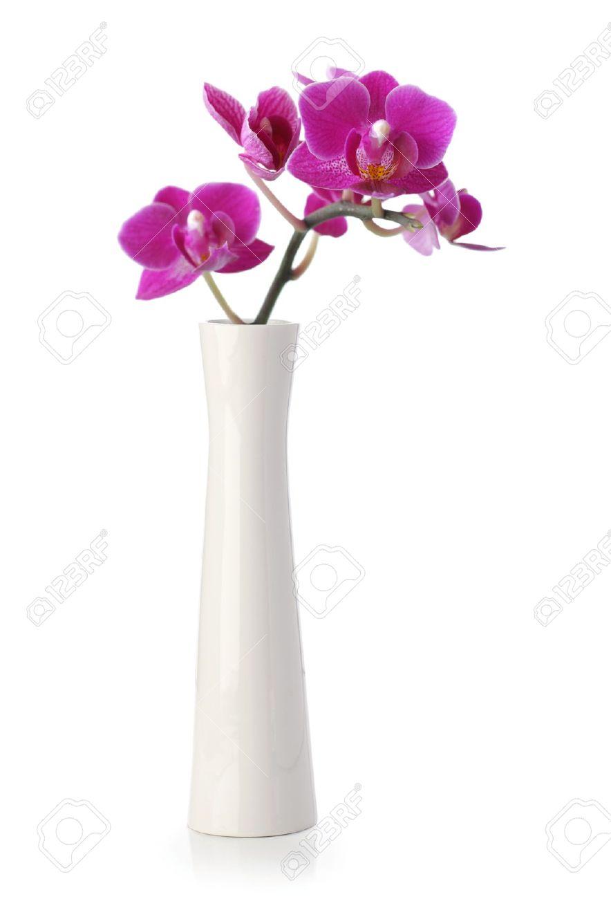 Fleur Rose Orchidee Dans Un Vase Blanc Isole Sur Blanc Banque D