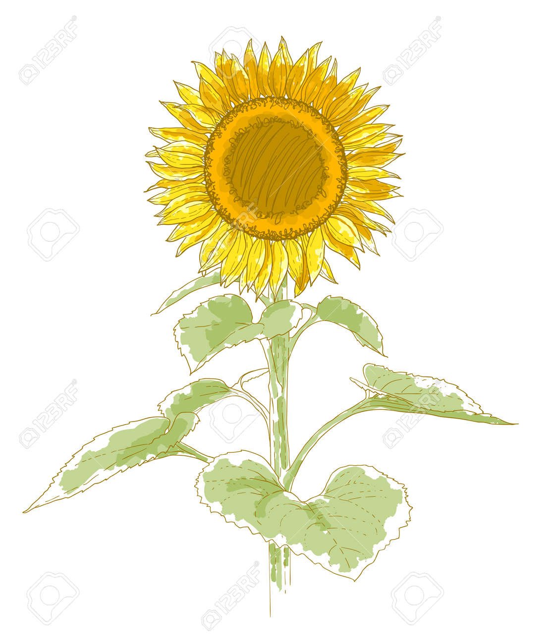Uncategorized Drawing Sunflower hand drawing sunflower isolated on white background watercolor and pen imitation stock vector 12491332
