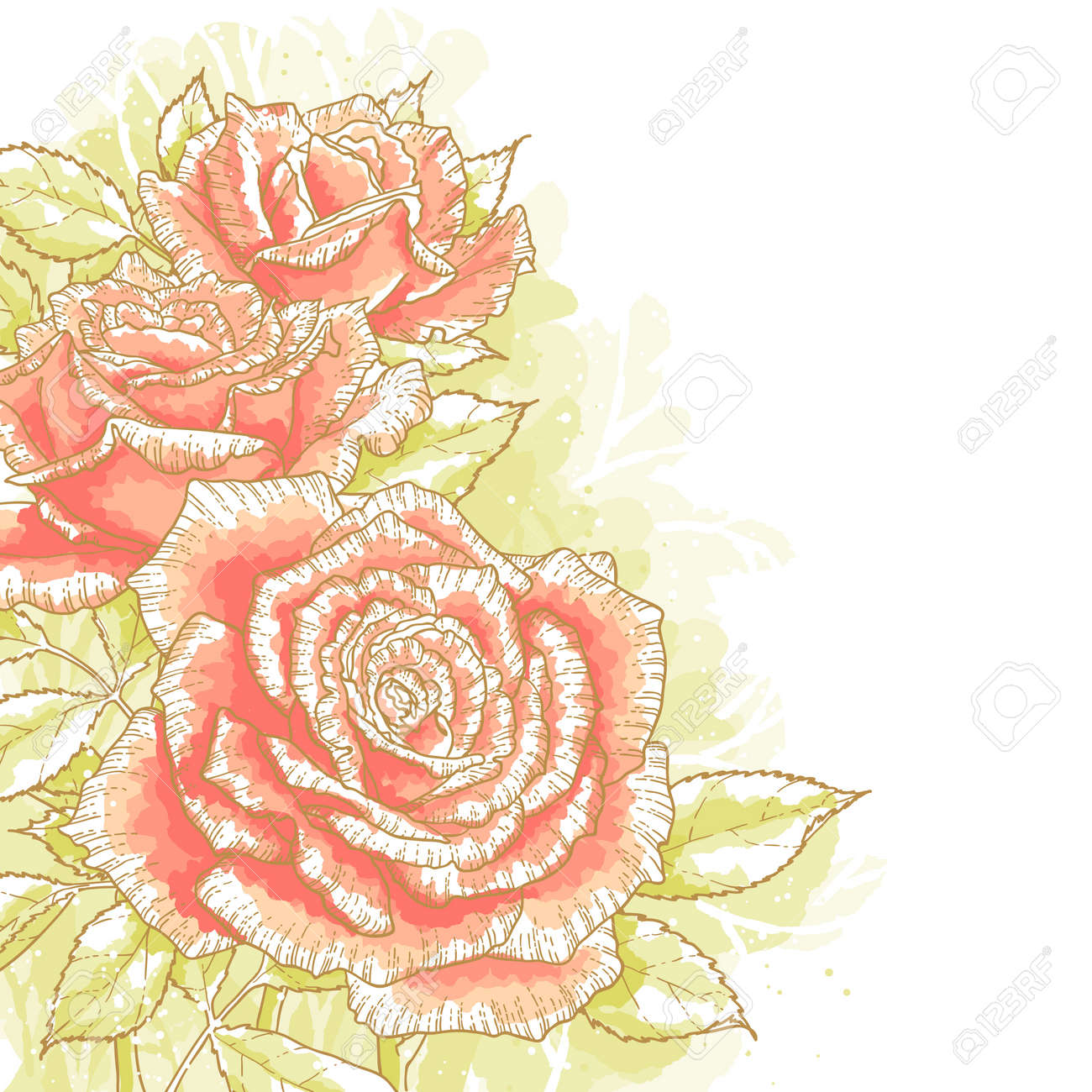 The contour drawing pink roses with leaves on white background  Watercolor style  Can be used as background for invitation cards Stock Vector - 15627548