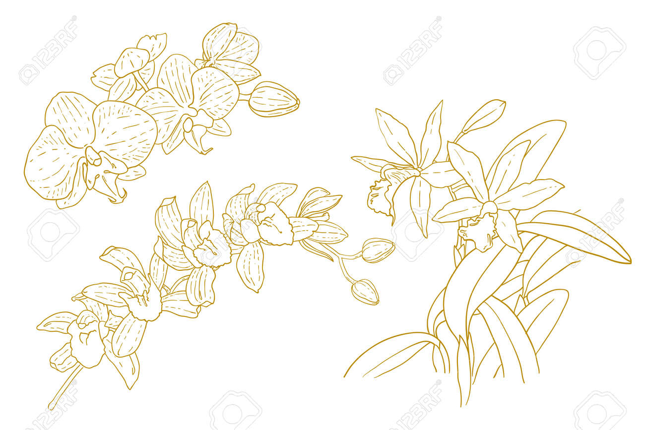 Set of one-colored outlined orchids isolated on white background Stock Vector - 15627543