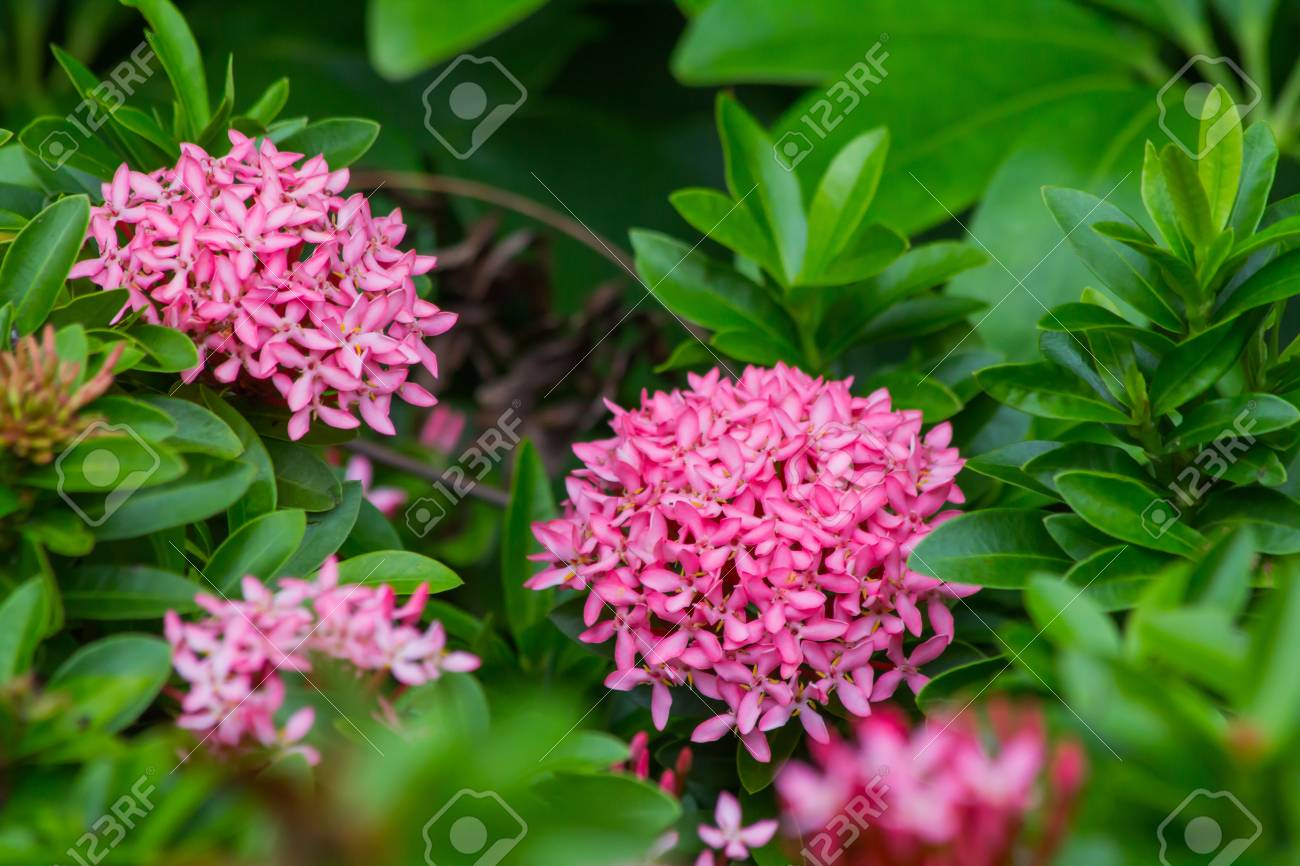 Pink spike flower stock photo picture and royalty free image image pink spike flower stock photo 103667464 mightylinksfo
