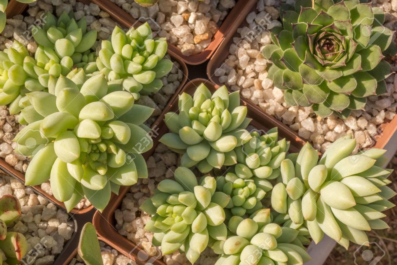 las plantas suculentas en pequeas jardineras llenas de grava spera y ver desde arriba foto