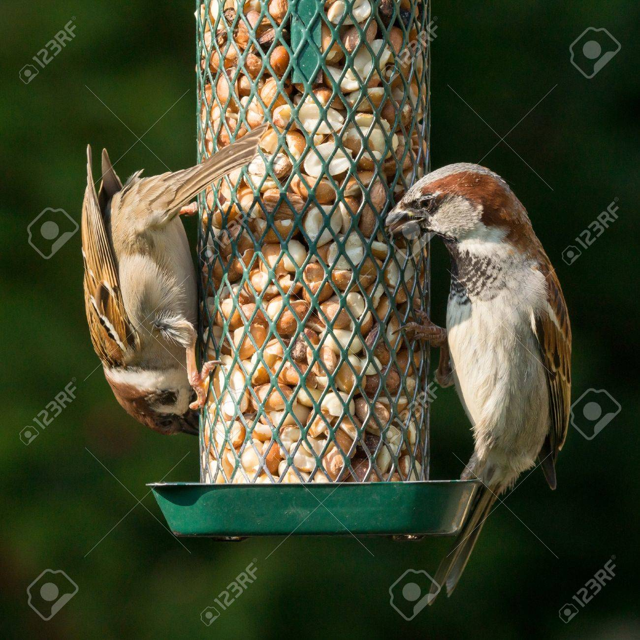 has peanut bird a castle chennai plans full outstanding philippines image in beautiful drogo houses sale seed feeder for