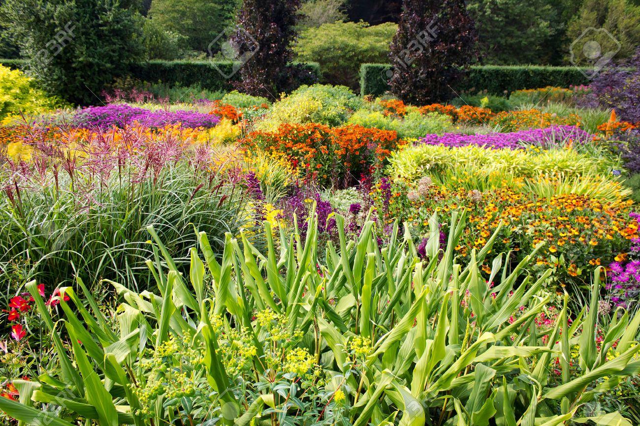 Colorful Flower Garden - 54403144