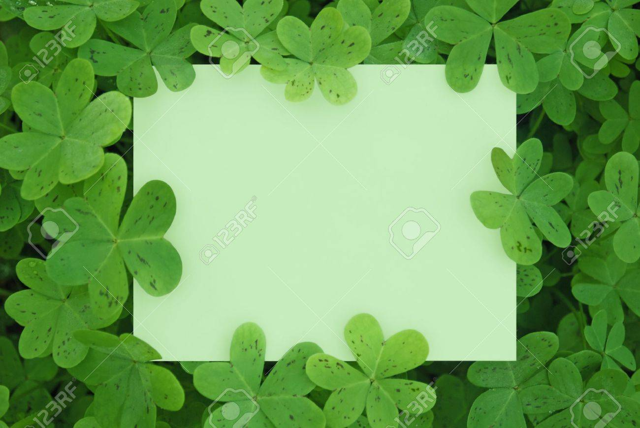 A Blank Card Surrounded in a Patch of Clovers. Stock Photo - 7051025