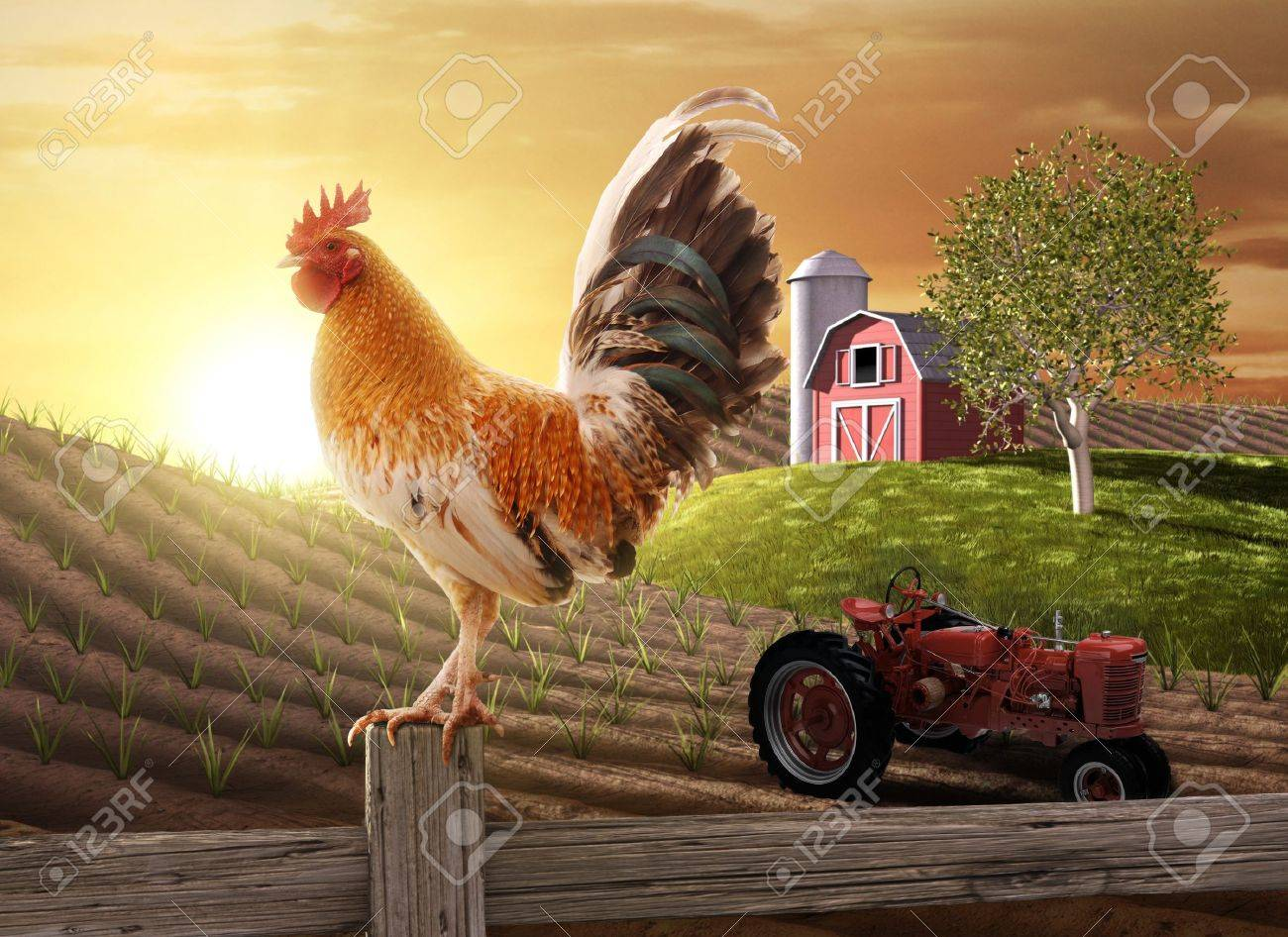 Rooster perched upon a farm fence post as the sun rises behind him Stock Photo - 7058884