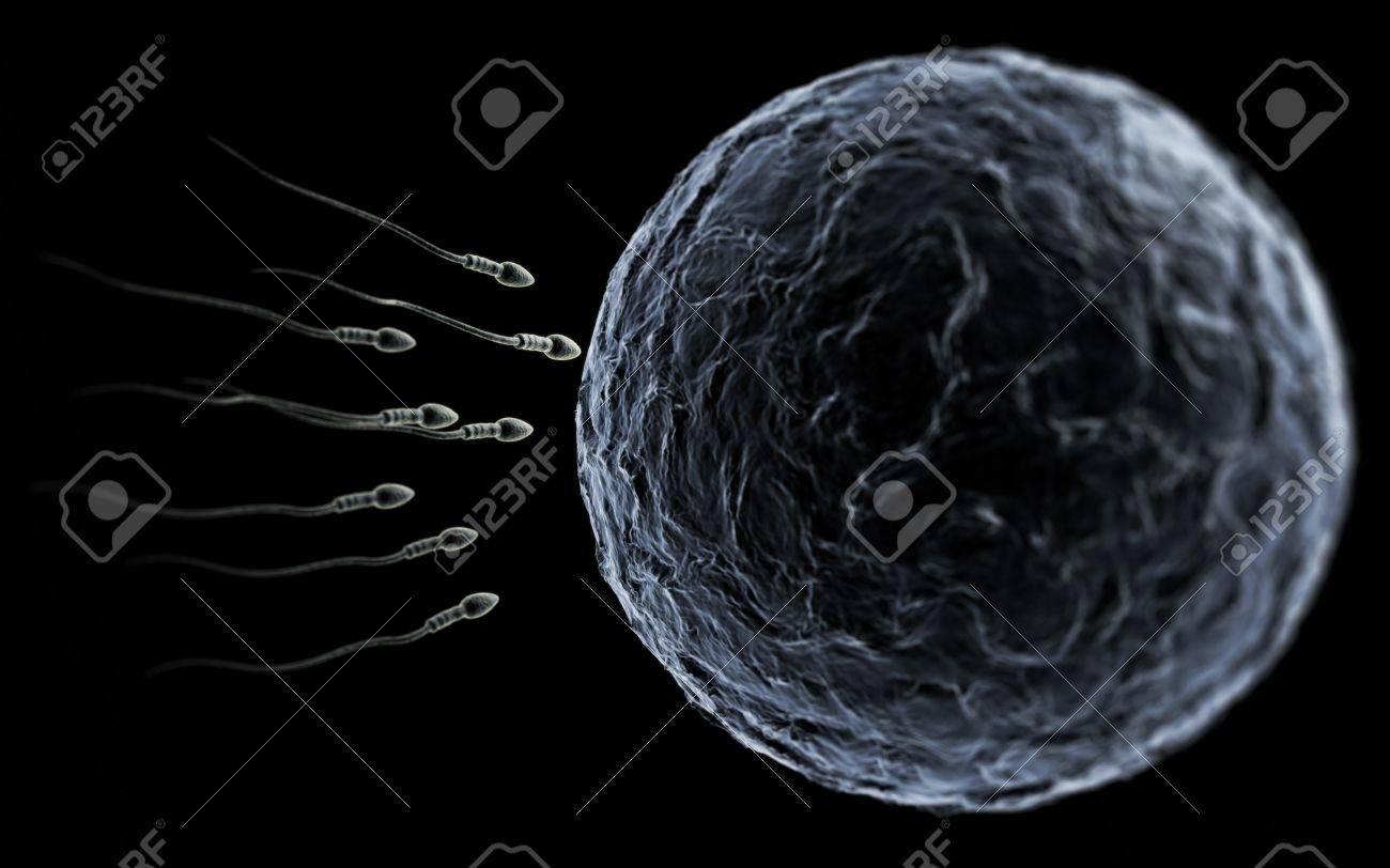 Sperm swimming toward the egg Sperm Egg Microscope