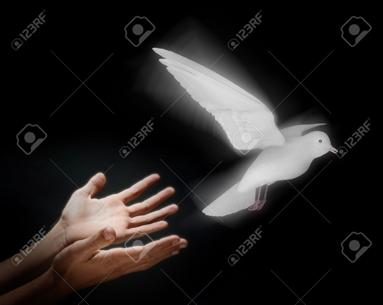 Two hands on a black background releasing a luminous dove into flight Stock Photo - 9524880