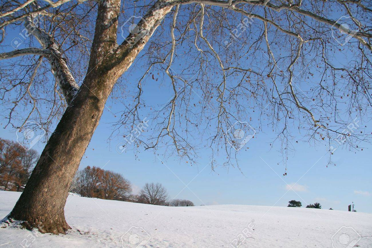 Winter wonderland with snow on hill and trees Stock Photo - 4006883