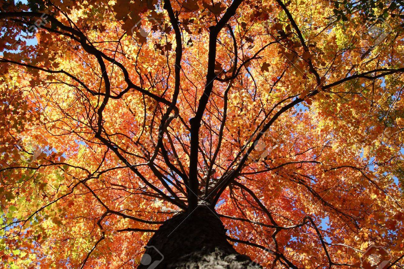 Fall Colors in the Forest Stock Photo - 5501507