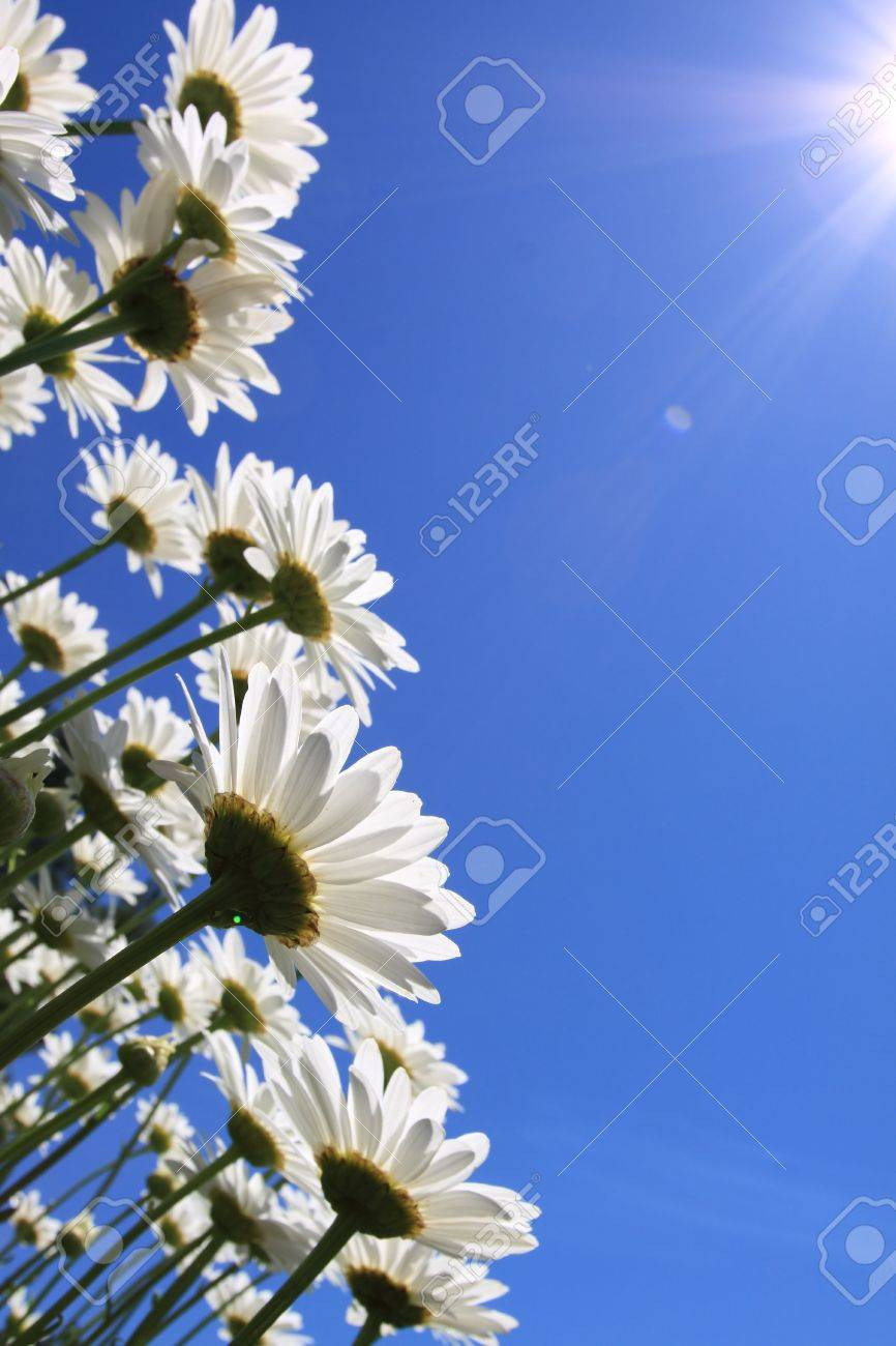 Summer flowers daisies and blue sky background stock photo stock photo summer flowers daisies and blue sky background izmirmasajfo