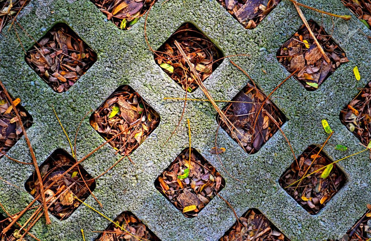 a hollow blocks in our backyard where dried leaves are stranded