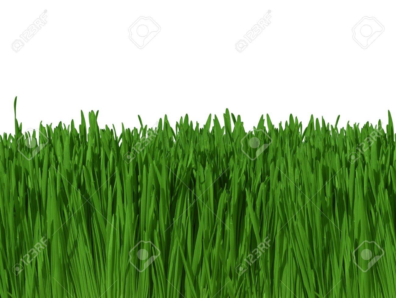 Background image 300 dpi - Background Of Green Grass Against Blue Sky Macro Focus 300dpi Includes Clipping Path