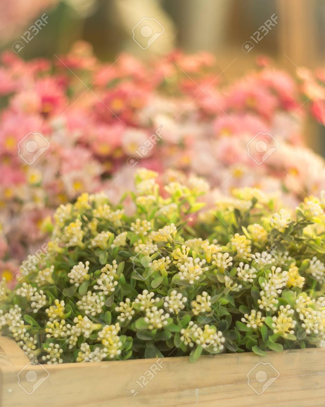 Fleur En Plastique En Boite En Bois Banque D Images Et Photos Libres