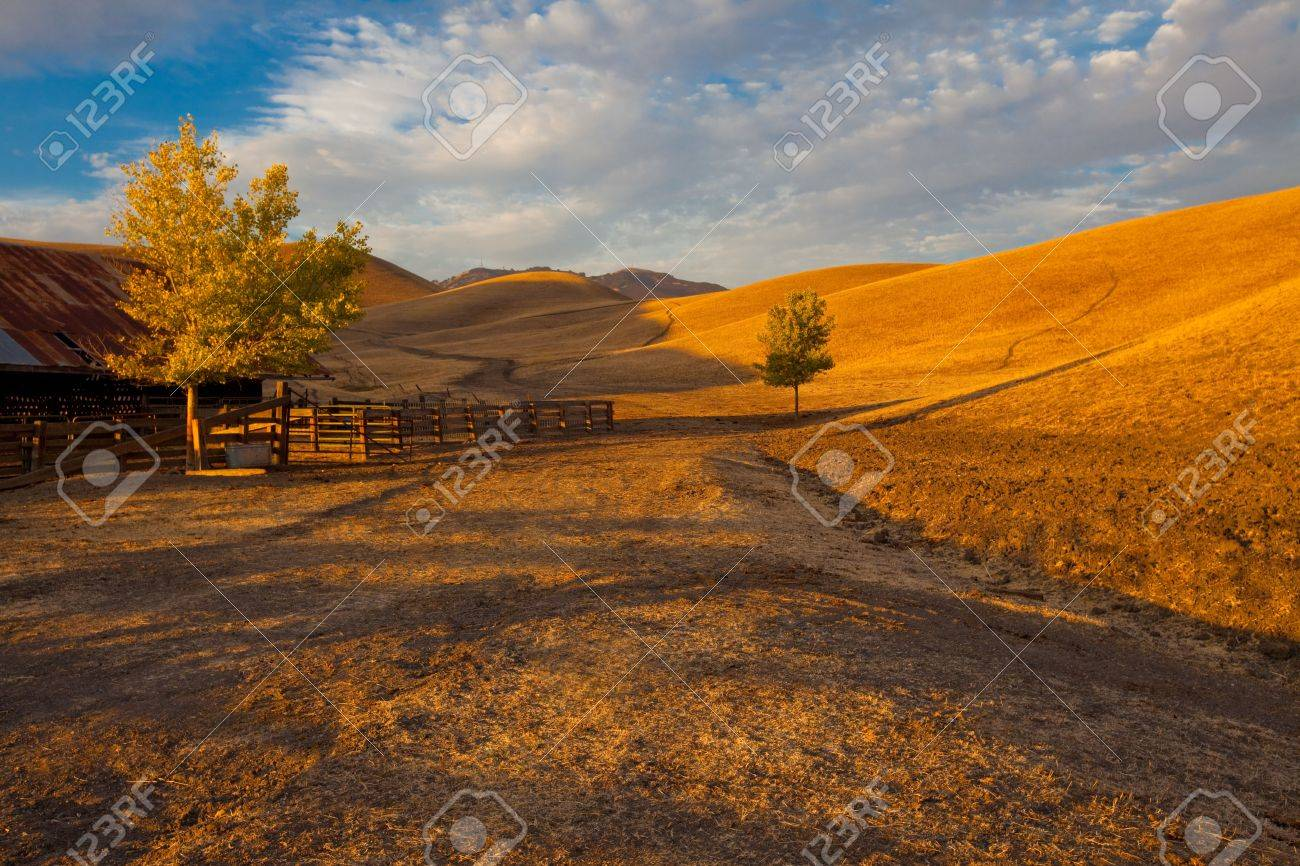California farm land scene with rolling grassland / pasture hills and a path leading into the distance in early evening warm sunlight Stock Photo - 7065558