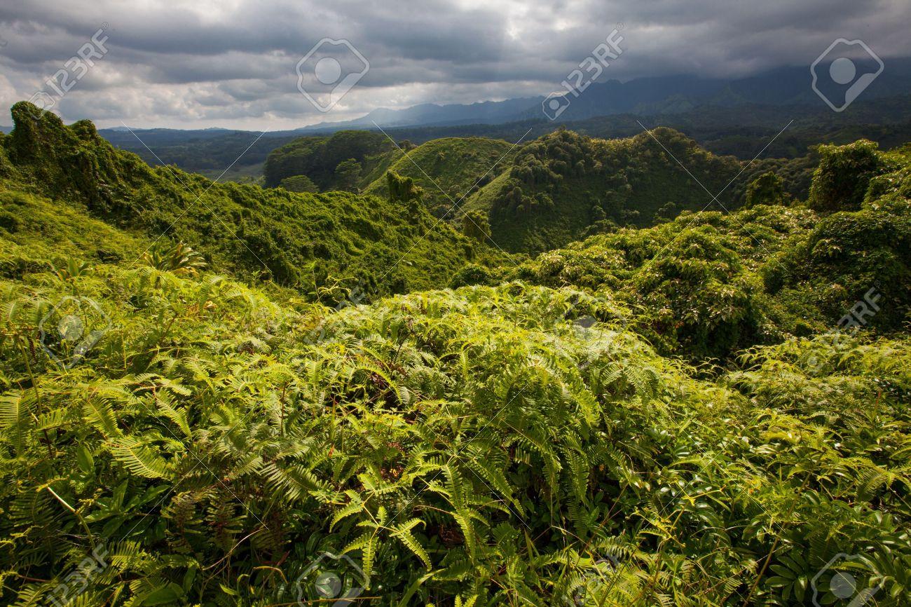 Lush, Prístino, Verde Esmeralda, Bosque Tropical En La Región ...
