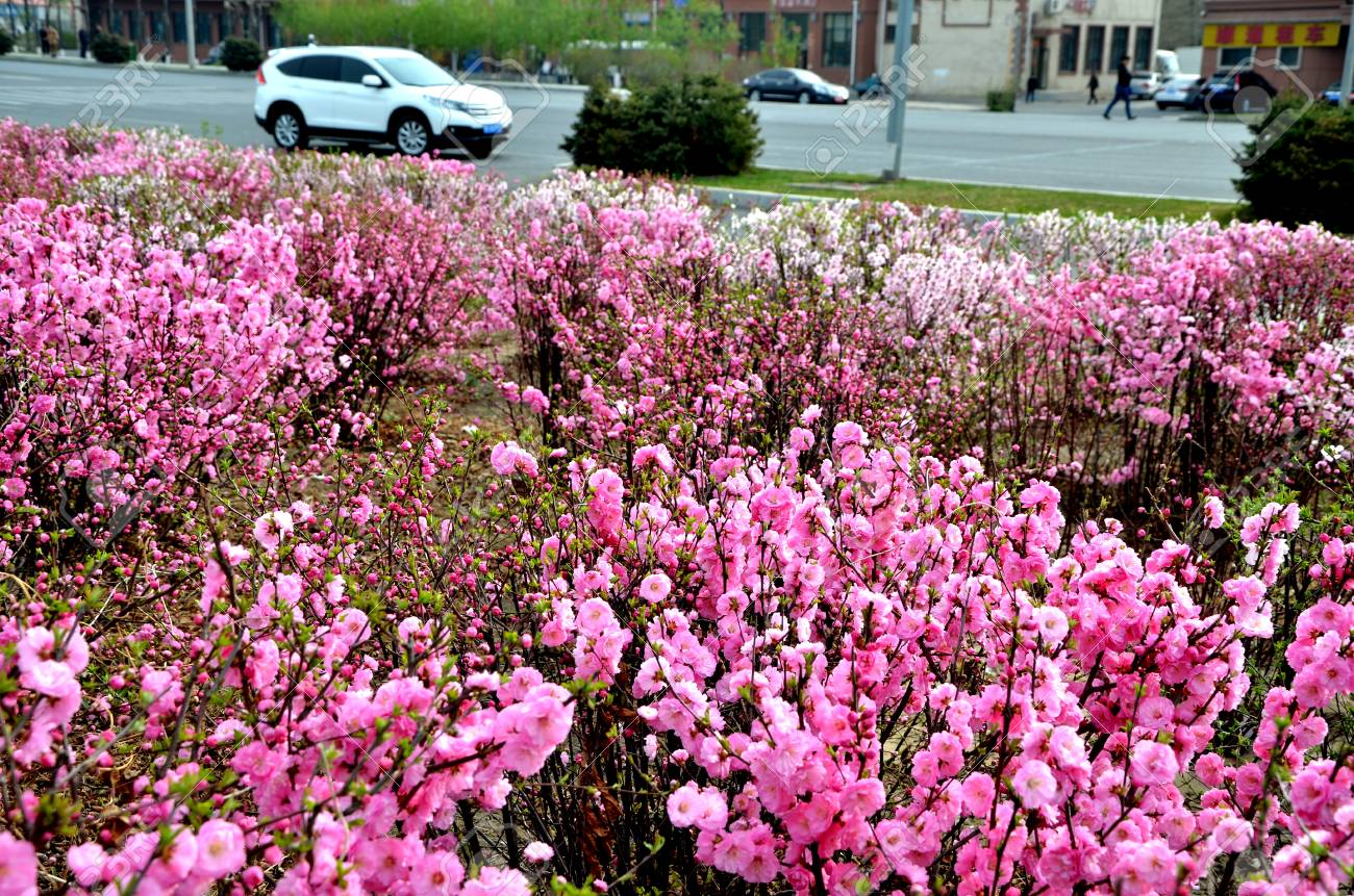 Flower Bushes Beside A Road Stock Photo Picture And Royalty Free