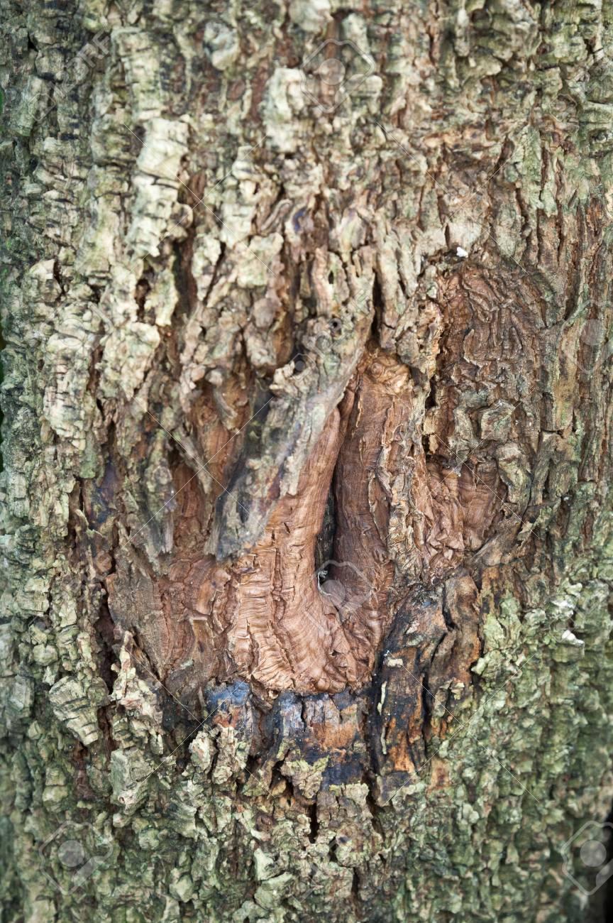 A hole on Tree bark Stock Photo - 16547725