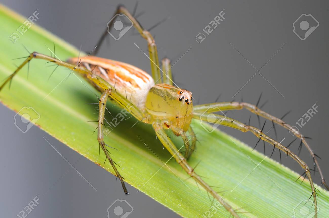 macro photography of spider on green leaf Stock Photo - 16864749