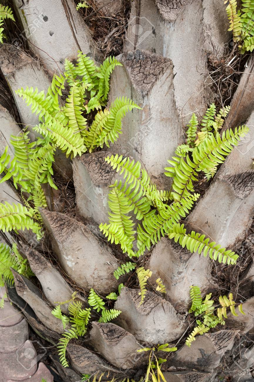 green fern growing on palm tree Stock Photo - 16974576