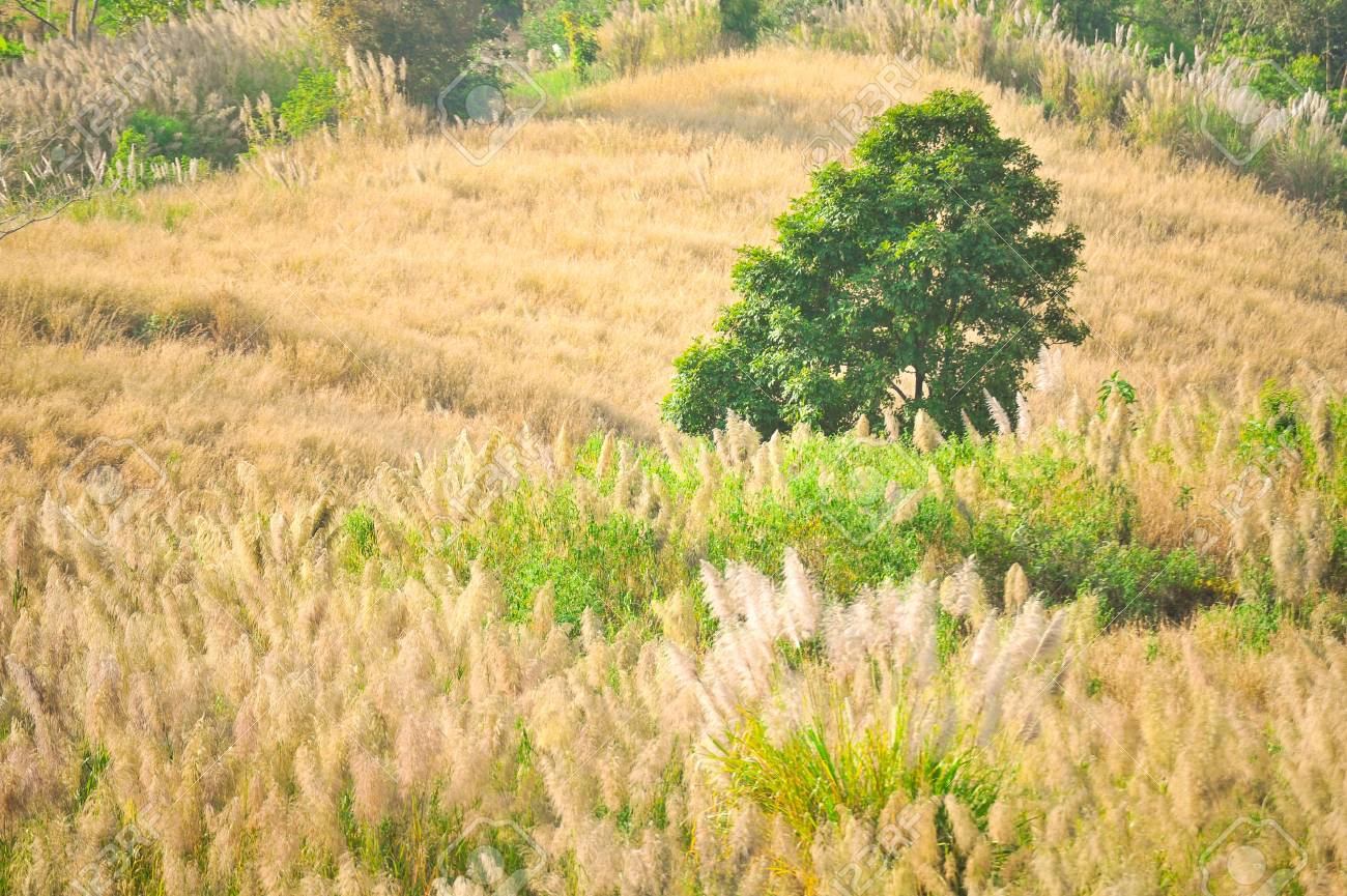 Lonely tree on the grass land on hill Stock Photo - 17300787
