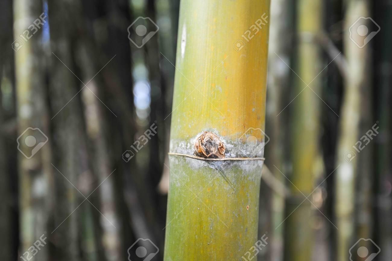 light green bamboo Stock Photo - 17594810