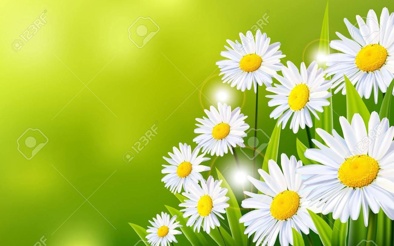 Daisy Flowers Background For You Design Royalty Free Cliparts
